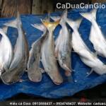 Cá Dứa tươi thiên nhiên hàng xịn